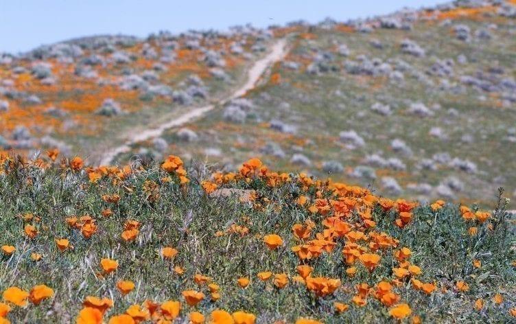 5 Bucket List Wildflower Hikes